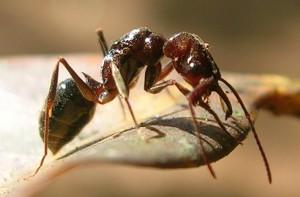 Réalisons une fourmi en carton