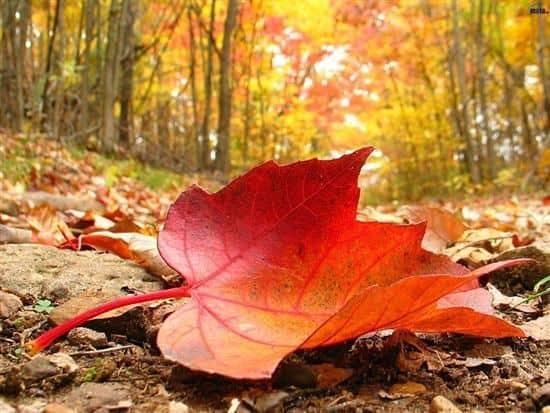 Des animaux en feuilles mortes : activité d'automne pour les enfants ! -  YaPasEcole !